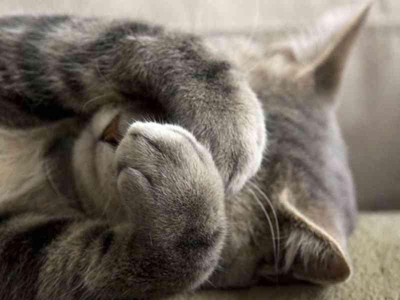reducir estres en gatos