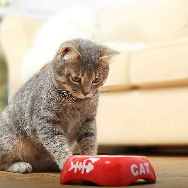 tratamiento nutricional diabetes en gatos