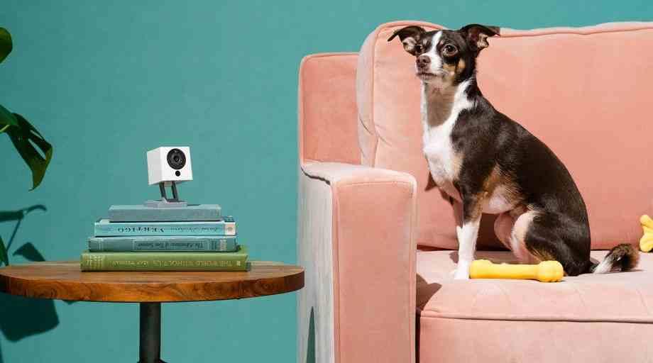cámara interactiva para perros