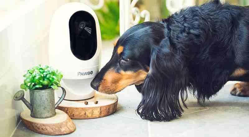 cámara seguridad mascotas