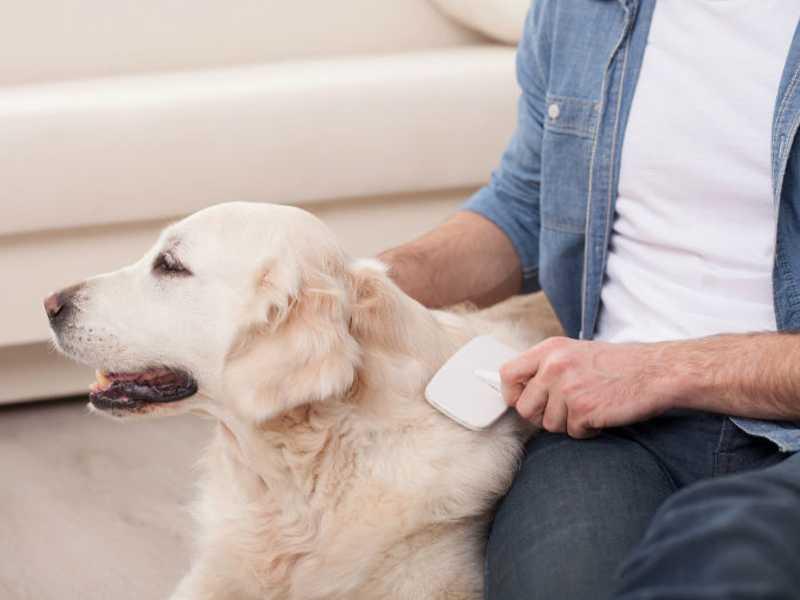 cepillos para perros labrador