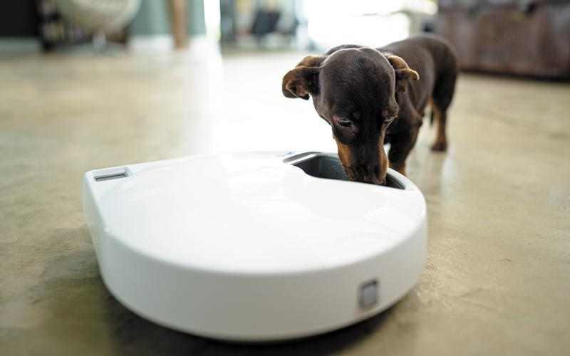 dispensador de comida para perros automático