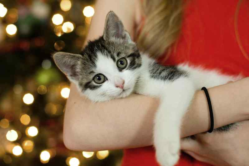 razas de gatos hipoalergenicos