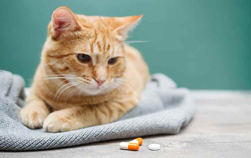 gingivitis en gatos antibióticos