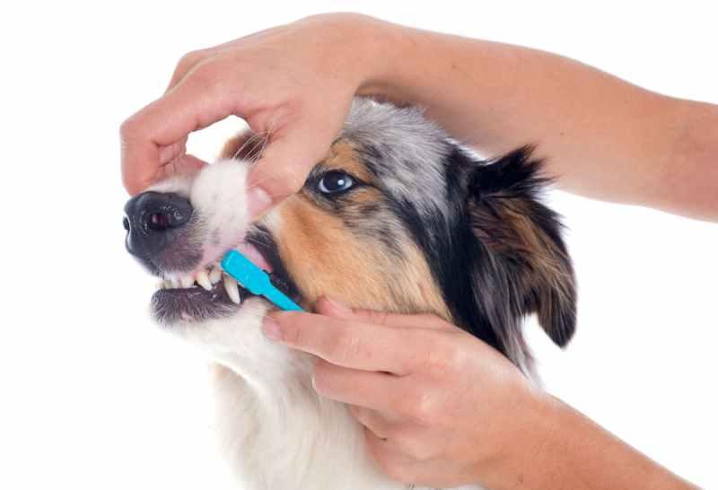 periodontitis en peros