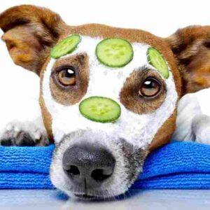 Productos naturales para piel y pelo perros: 11 mejores alternativas