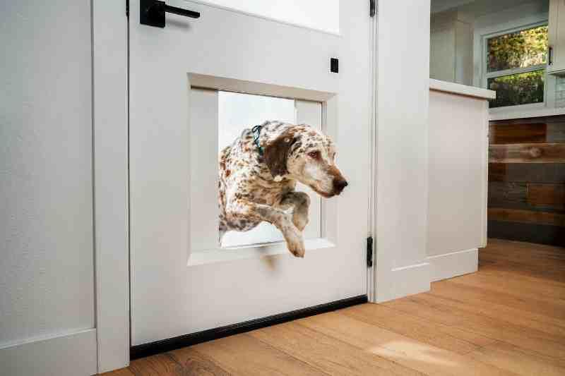 puertas vaivén paa perros