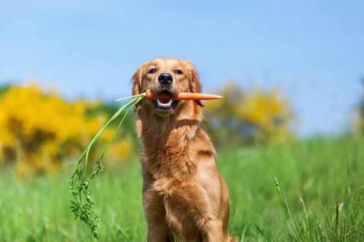 Tratamientos naturales para perros