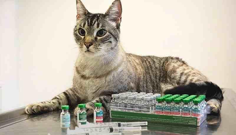 calendario vacunacion gatos