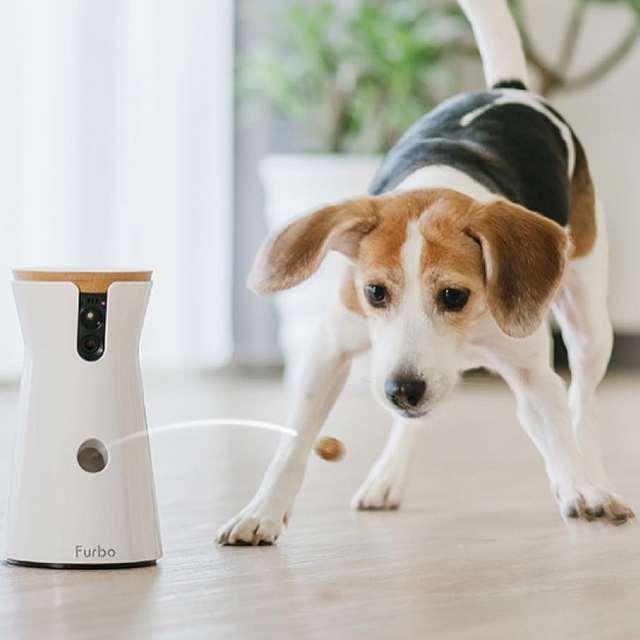 camara de vigilancia para perros