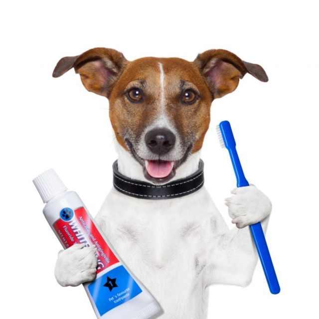 higiene dental para perros