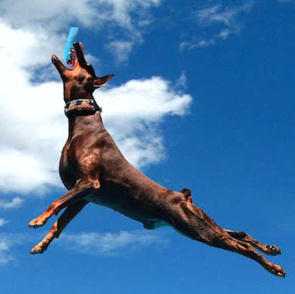 perros para hacer deporte