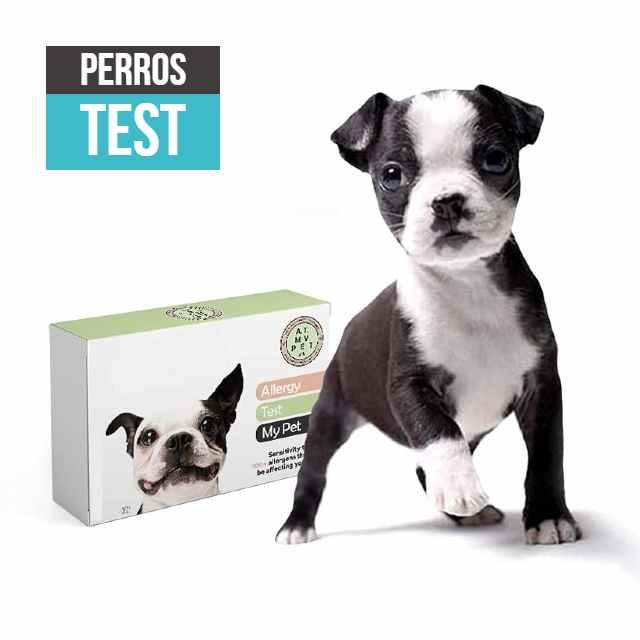 pruebas para perros test